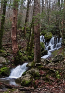 Unamed, along Middle Prong, Great Smoky Mountains, TN
