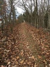 The long, steep trail up Bays Ridge