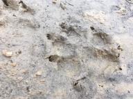 Evidence of wildlife