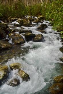 Porter Creek,Great Smoky Mountains National Park