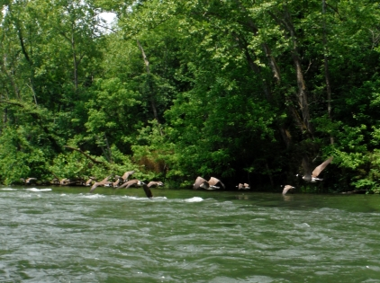 There was a lot of traffic on the river, and lots of honking.