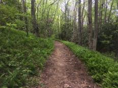Fern lined path