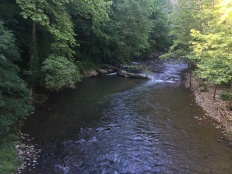 Looking up the Guest River