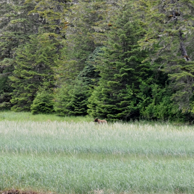 We saw an adult bear along the way. Fortunately, he was a good distance away and going in the other direction.
