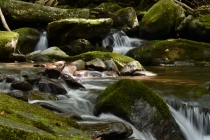 Kephart Prong, Great Smoky Mountains