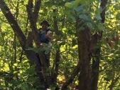 LakeBum hiding a cache up a tree