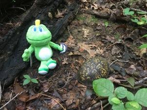 Mr. Turtle is very anti-social