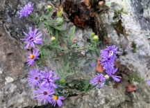 Pretty purple flowers that were growing from a rock cliff