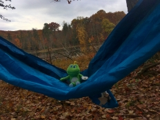 Signal sneaks some hammock time.