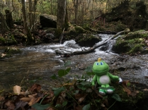 Signal enjoys the cascade.