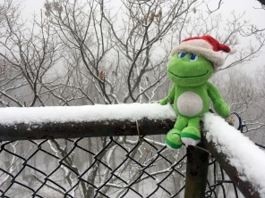 Even frogs like snow.