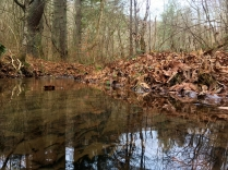 Reflections on the creek in Back Hollow.