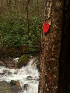 Trail marker along Rocky Fork