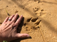 That's a big paw!