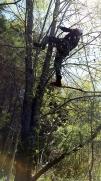 Tree number 2.