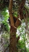 Tree number 3