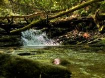 Little Oak's Little Falls